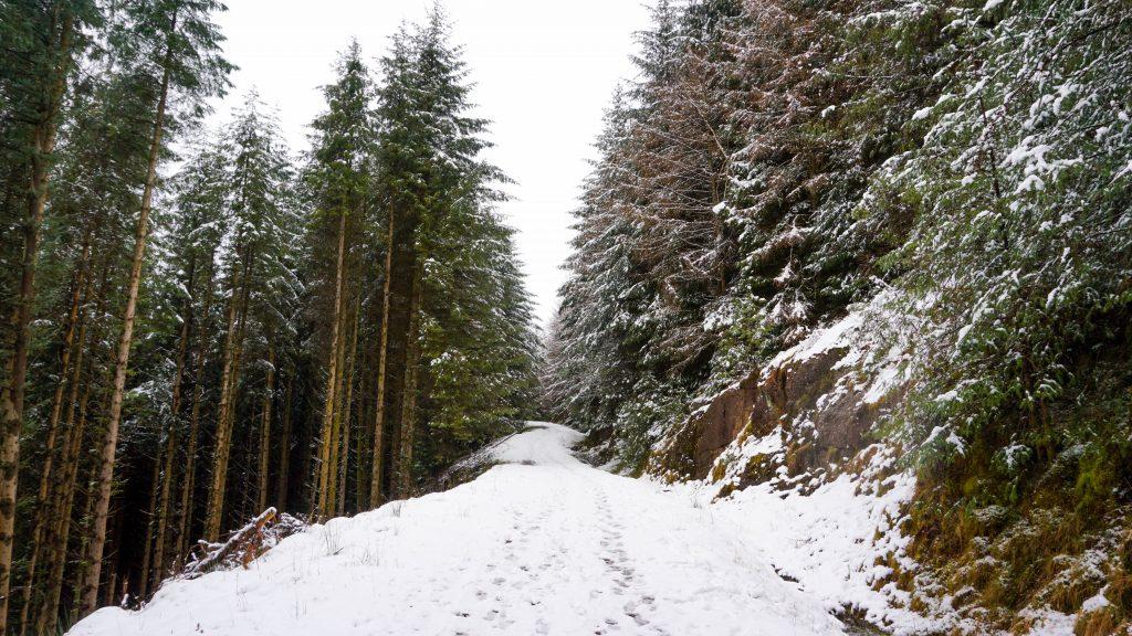 Callader Forest
