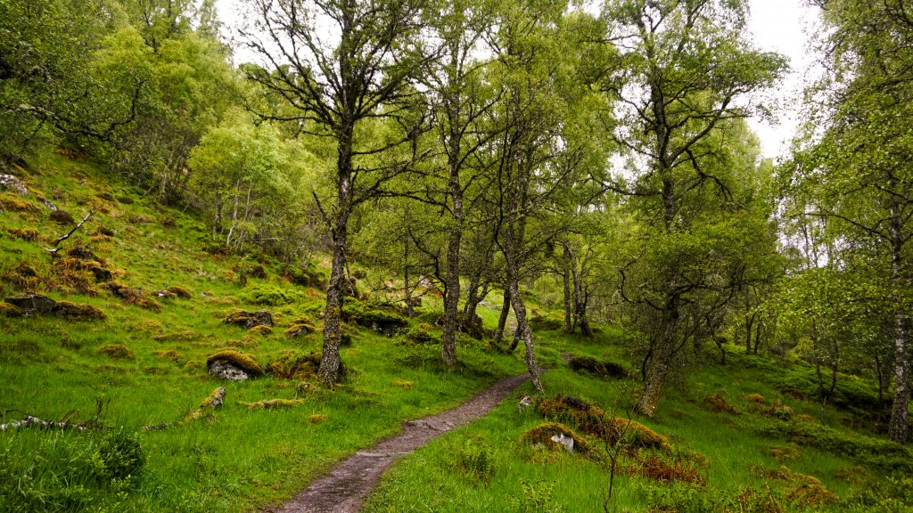 Graigellachie National Nature Reserve