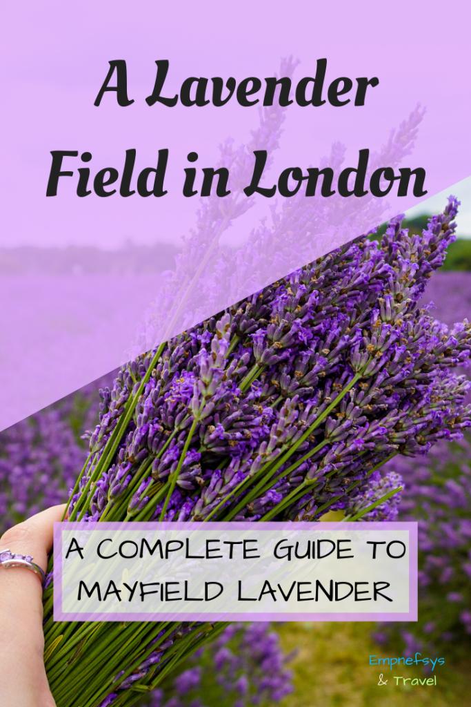 London Lavender Field Pinterest Graphic