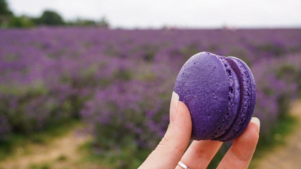 Macaroon at Mayfield Lavender Farm Lodnon